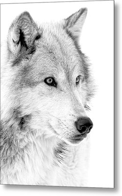 Grey Wolf Profile Metal Print
