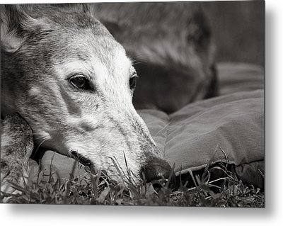 Greyful Metal Print by Angela Rath