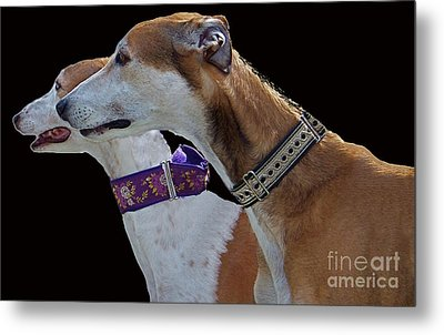 Greyhounds Metal Print by Scott Hervieux