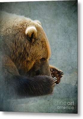 Grizzly Bear Lying Down Metal Print by Betty LaRue