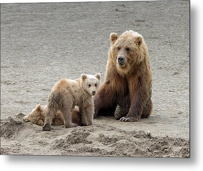 Metal Print featuring the photograph Grizzly Family by Phil Stone