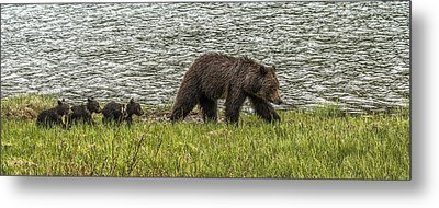 Metal Print featuring the photograph Grizzly Family by Yeates Photography