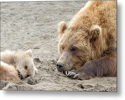Metal Print featuring the photograph Grizzly Mom And Cub by Phil Stone