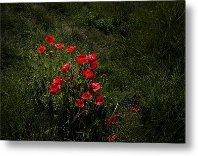 Group Of Poppies Metal Print by Svetlana Sewell
