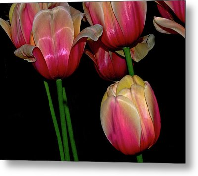 Grouping Ofpink And Yellow Tulips Metal Print