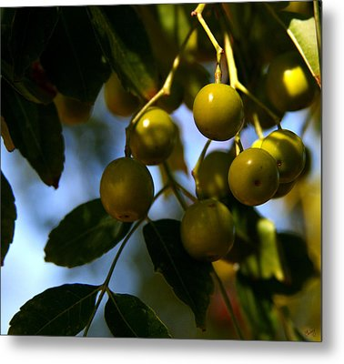 Growing In The Shade Metal Print