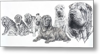 Metal Print featuring the drawing Growing Up Chinese Shar-pei by Barbara Keith