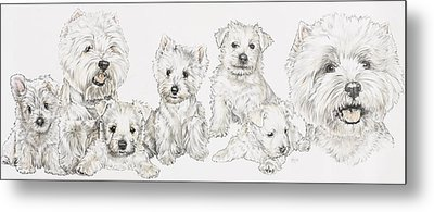 Growing Up West Highland White Terrier Metal Print by Barbara Keith