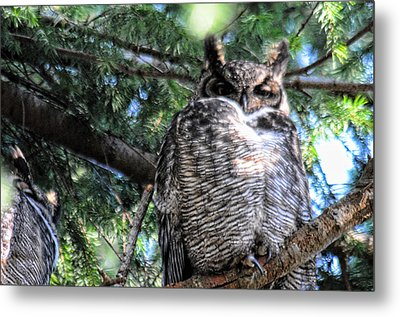 Grumpy Metal Print by Lawrence Christopher
