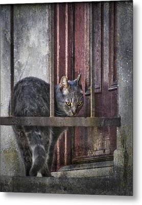 Metal Print featuring the photograph Grunge Cat by Kevin Bergen