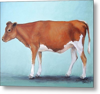Guernsey Cow Standing Light Teal Background Metal Print by Dottie Dracos