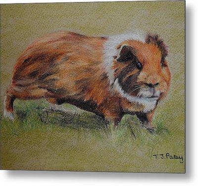 Guinea Pig Metal Print by Tanya Patey