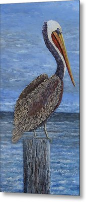 Gulf Coast Brown Pelican Metal Print
