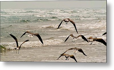Gulf Gulls Metal Print by Michael Flood