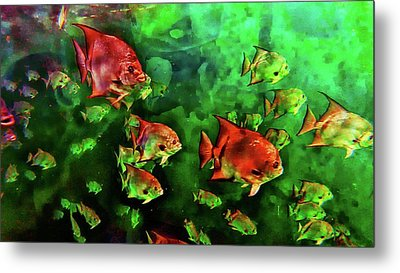 Gulf Of Mexico Reef Metal Print