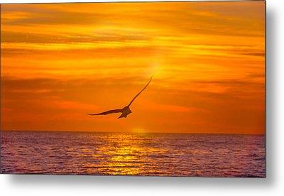 Gull At Sunrise Metal Print by Allan Levin