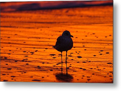 Gull Caught At Sunrise Metal Print