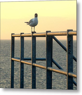 Metal Print featuring the photograph Gull On A Rail by Michael Canning