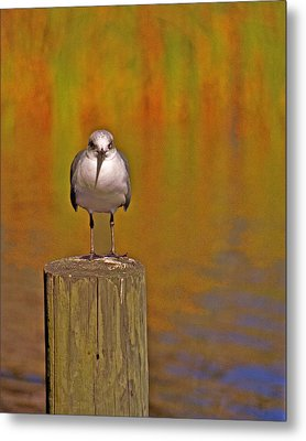 Gull On Post Metal Print by Michael Peychich