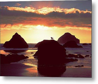 Gull On Rock Bandon Beach Sunset Metal Print