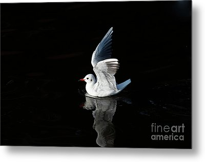Gull On The Water Metal Print by Michal Boubin