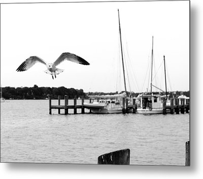 Gull Wing Metal Print