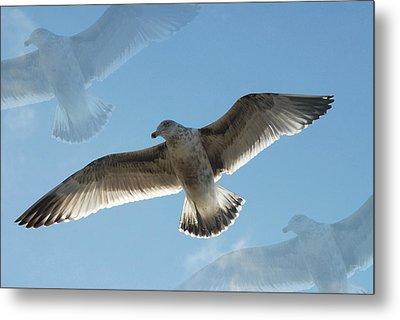Gulls 41 Metal Print by Joyce StJames