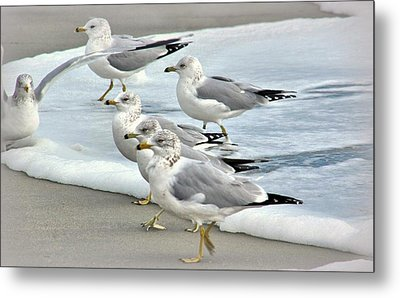 Gulls In The Surf Metal Print by Rosanne Jordan