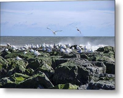 Gulls On Rock Jetty Metal Print