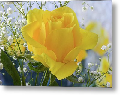 Metal Print featuring the photograph Gypsophila And The Rose. by Terence Davis