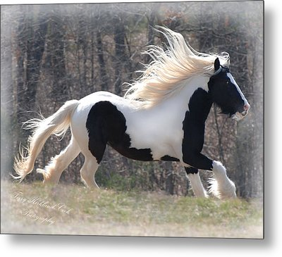Gypsy Stallion Esperanzo Metal Print by Terry Kirkland Cook