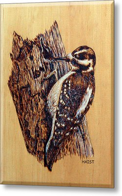 Hairy Woodpecker Metal Print by Ron Haist