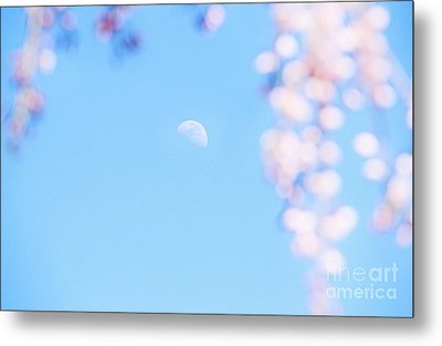 Half Moon And Weeping Cherry Blossoms Metal Print by Charline Xia