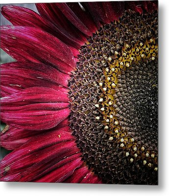 Half Red Metal Print by Karen Stahlros