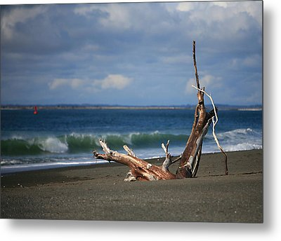 Halfmoon Bay Driftwood Metal Print by Mike Coverdale