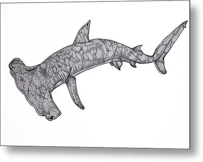Hammer Head Shark Metal Print by Nick Gustafson