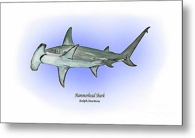 Hammerhead Shark Metal Print by Ralph Martens