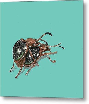Handsome Fungus Beetles Metal Print