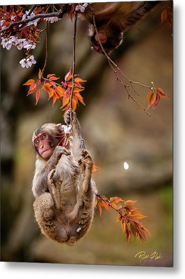 Metal Print featuring the photograph Hang In There, Baby Redux by Rikk Flohr