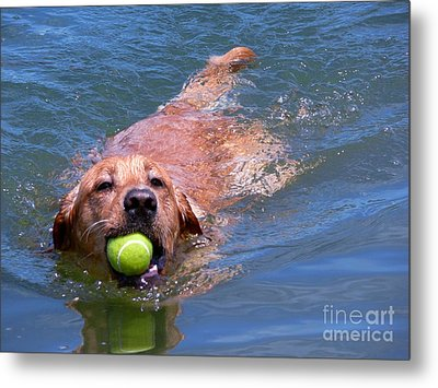 Metal Print featuring the photograph Happiness by Terri Thompson