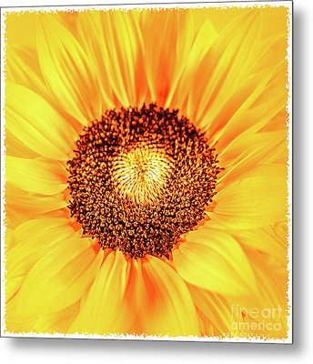 Happy Day Metal Print by Mona Stut