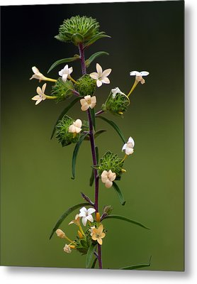Metal Print featuring the photograph Happy Flowers by Ben Upham III