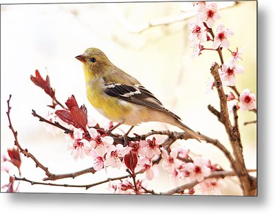 Happy Goldfinch Metal Print by Trina Ansel