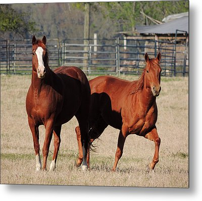 Happy Horses Hoofin-it Metal Print by Kim Pate
