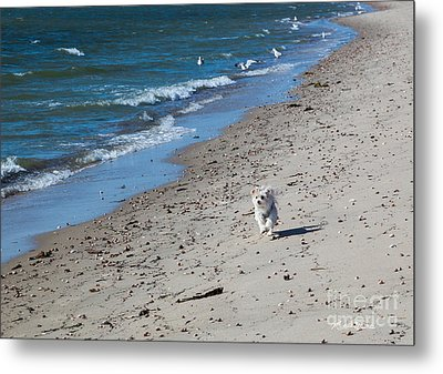 Metal Print featuring the photograph Happy I Am by Michelle Wiarda