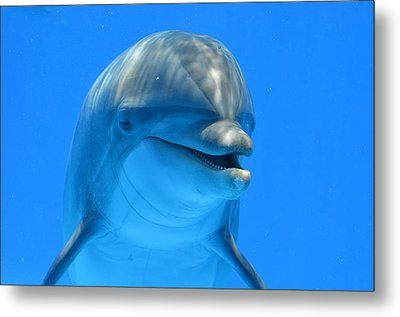 Happy Smiling Dolphin Metal Print by Richard Bryce and Family