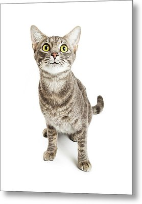 Happy Smiling Young Cat Expressive Eyes Metal Print