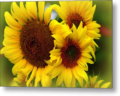 Metal Print featuring the photograph Happy Sunflowers by Kay Novy