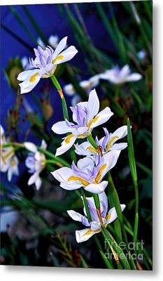 Happy Wild Iris Metal Print by Kaye Menner