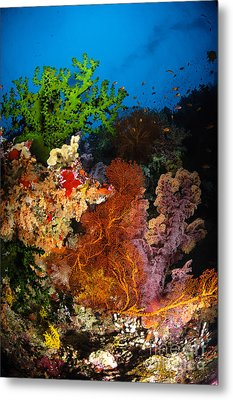 Hard Coral And Soft Coral Seascape Metal Print by Todd Winner